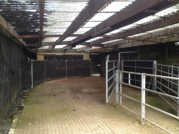 how to build a cattle handling systems